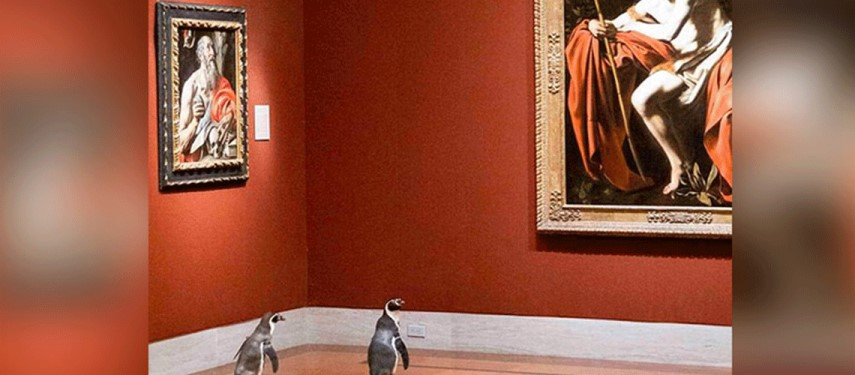 Penguins get treated to art in empty US museum