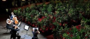 Barcelona's Gran Teatre del Liceu opera house reopens with concert performed to thousands of plants – in pictures
