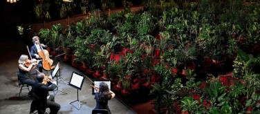You are currently viewing Barcelona's Gran Teatre del Liceu opera house reopens with concert performed to thousands of plants – in pictures