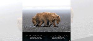 """جائزة حمدان بن محمد الدولية للتصوير تعلن الفائزين بموسم """"الماء"""""""